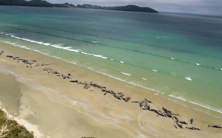 Περιβαλλοντική τραγωδία με 145 νεκρές φάλαινες