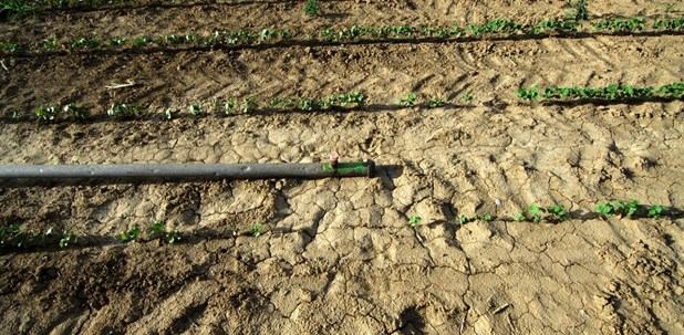 Οι γεωτρήσεις «στεγνώνουν» τον Θεσσαλικό κάμπο - Προβλήματα με τις καλλιέργειες