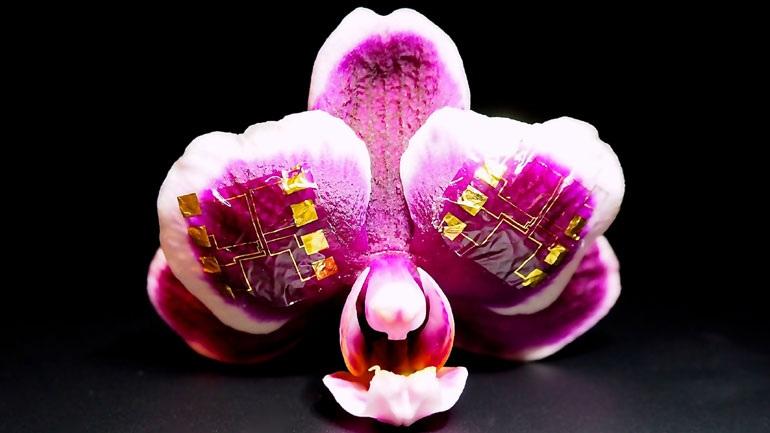 Δημιουργήθηκε ένα πρωτοποριακό τρανζίστορ για ιατρικές βιοηλεκτρονικές συσκευές