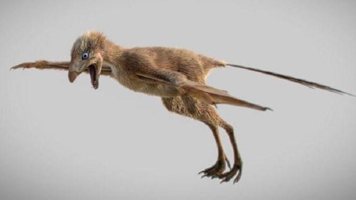 Μικροσκοπικός δεινόσαυρος με φτερά νυχτερίδας ανακαλύφθηκε στην Κίνα
