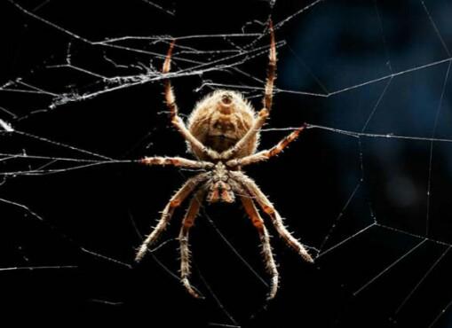 10 πράγματα που δεν ξέρετε για τις αράχνες