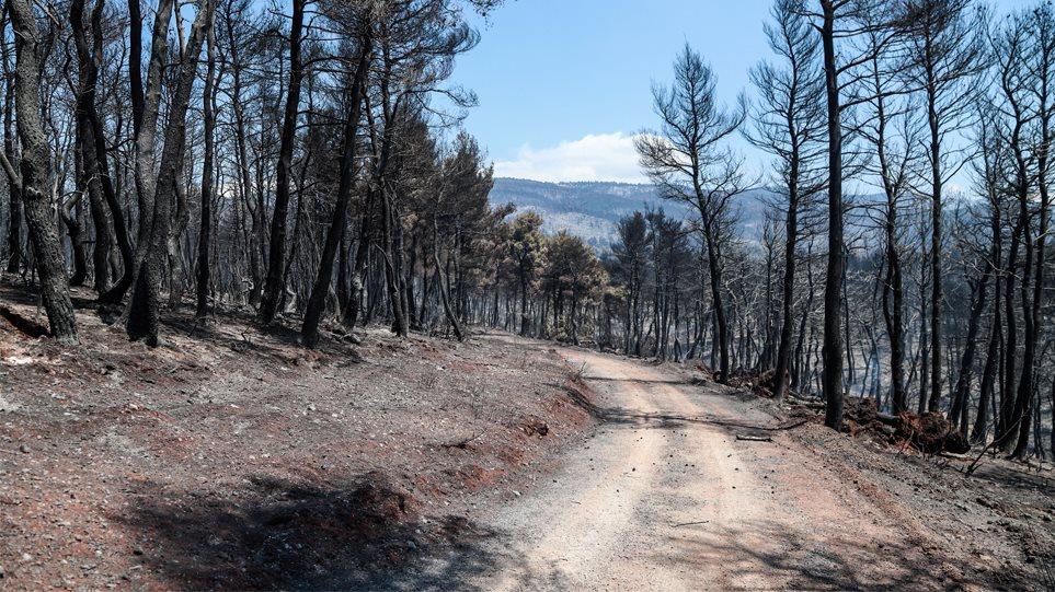 Φωτιά στην Εύβοια: Τα στοιχεία που «δείχνουν» εμπρησμό - Τρία τα ύποπτα άτομα
