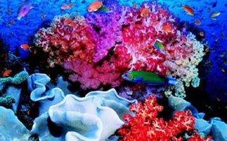 Θα εξαφανιστούν ως το 2050 οι κοραλλιογενείς ύφαλοι