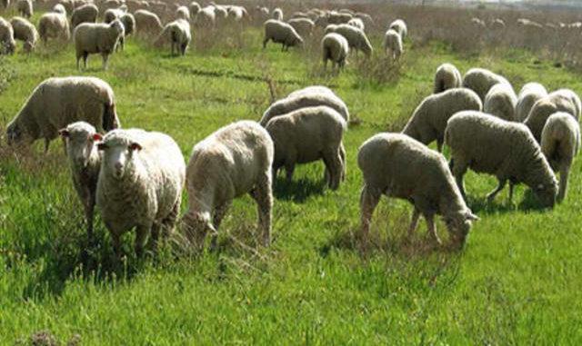 Πεινασμένα σκυλιά κατασπάραξαν πρόβατα στον Αμπελώνα