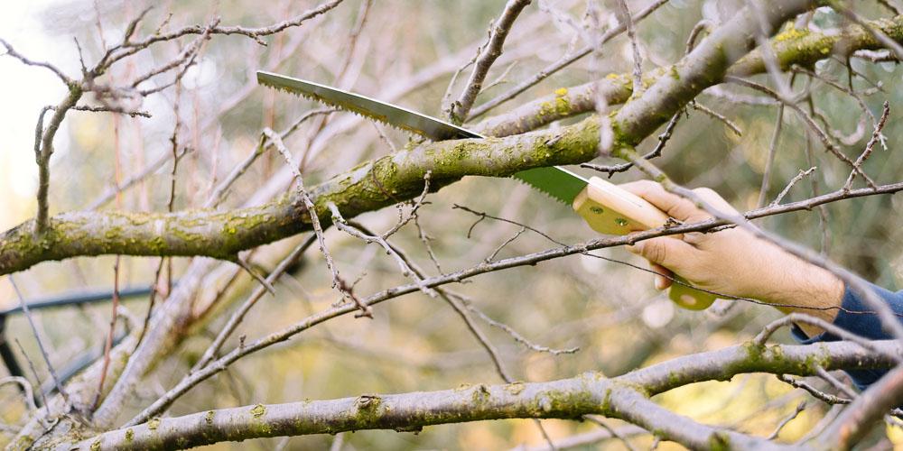 Λαρισαίος σκαρφάλωσε σε δέντρο, έπεσε και χτύπησε