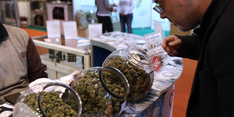Δύο νέες άδειες φαρμακευτικής κάνναβης στη Θεσσαλία