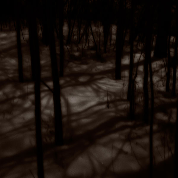 POTD: Moonlight Mystery