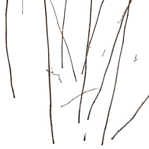 POTD: Sticks and Canes