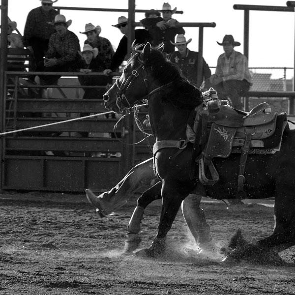 POTD: Zen Rodeo