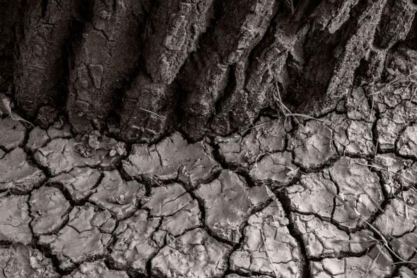 POTD: Cottonwood Mud