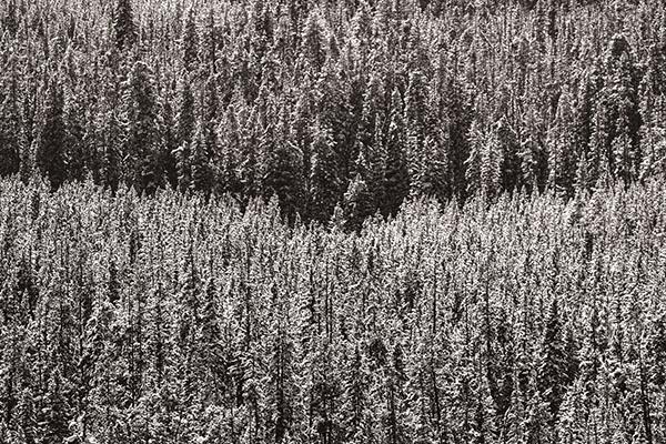 POTD: Arbor Rift