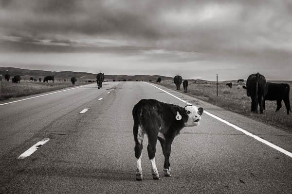 POTD: Montana Road Rage