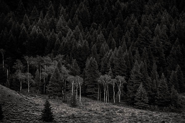 POTD: Edge of the Forest