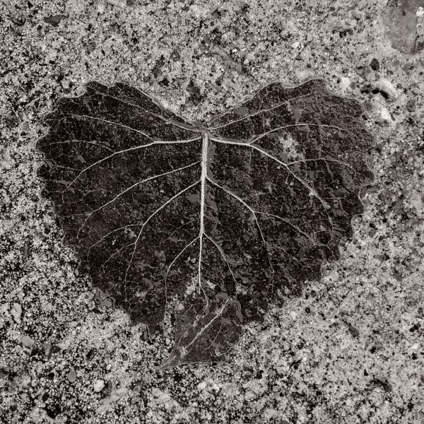 POTD: Heart of Stone