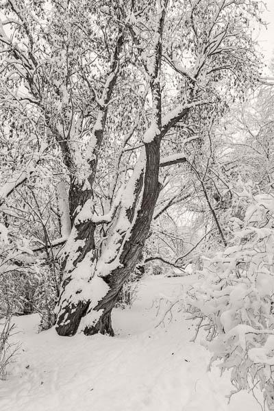 POTD: Winter Coat