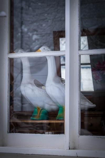 POTD: Duck, Duck, Goose