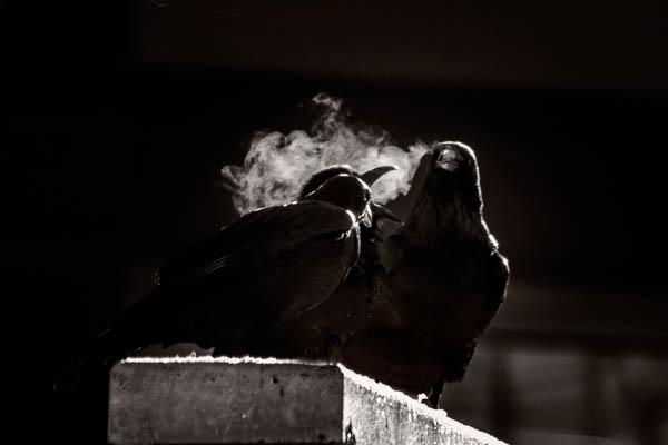 POTD: The Smoking Section