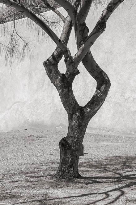 POTD: Palo Verde Pose