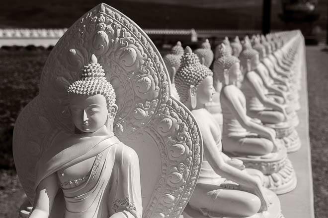 POTD: 1,000 Buddhas