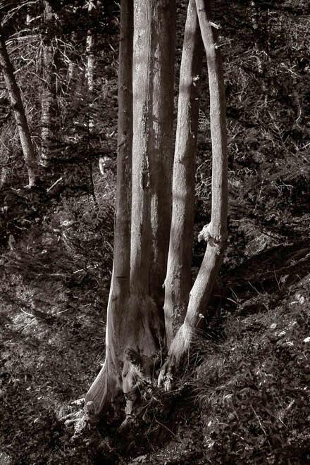 POTD: Arboreal Arc