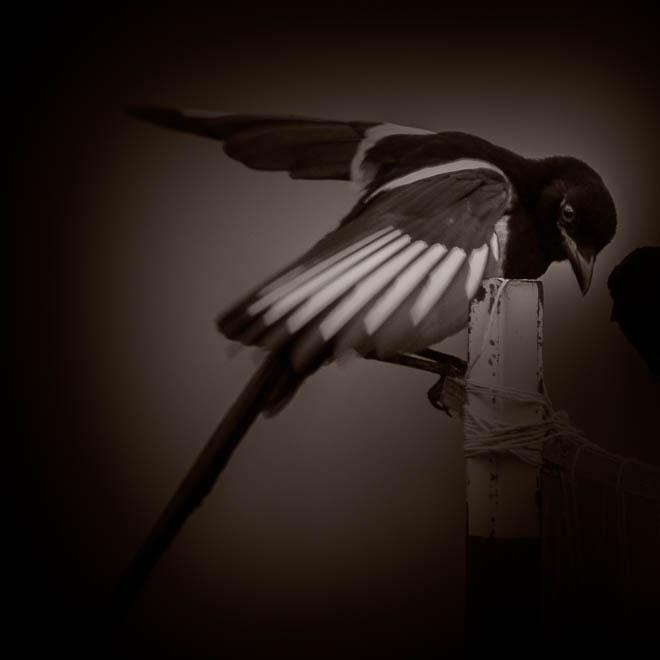 POTD: Bird Yoga