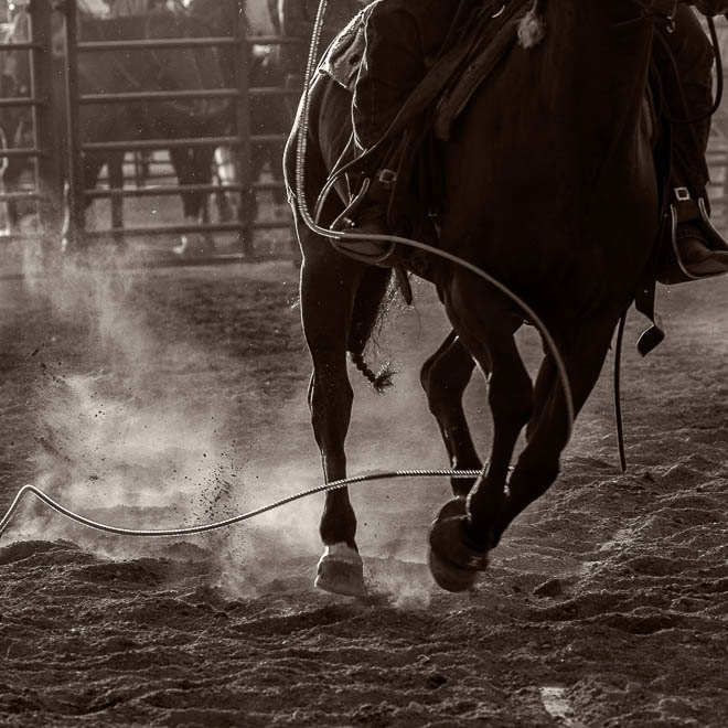 POTD: How Not to Rope a Steer
