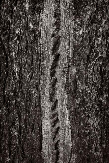 POTD: Tree Zipper