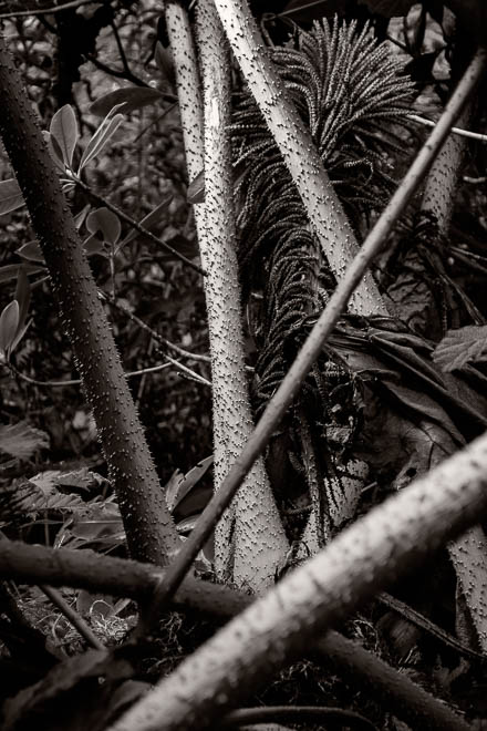 POTD: Urban Jungle