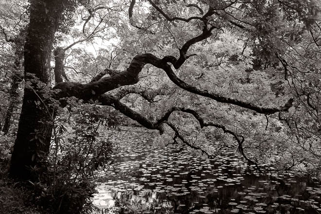 POTD: Over the Pond