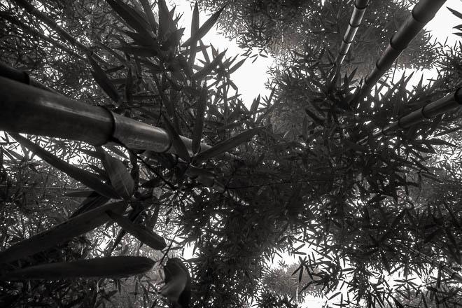 POTD: Bamboo #3