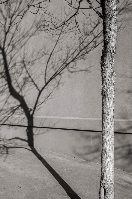 POTD: The Starkness of Winter