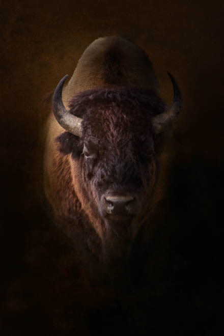 POTD: Rembrandt in Yellowstone