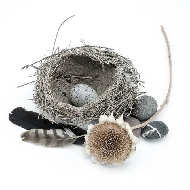POTD: Empty Nest #2
