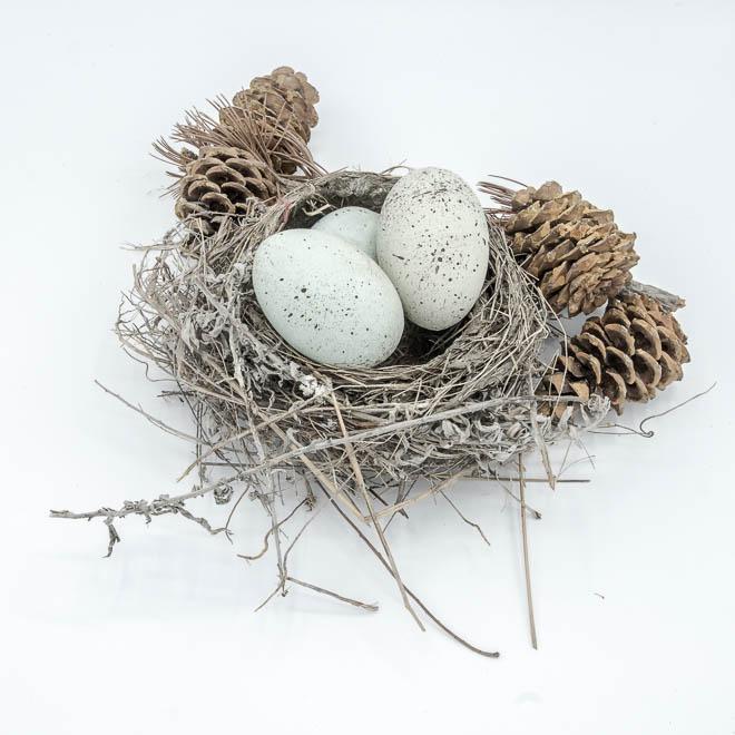 POTD: Empty Nest #3