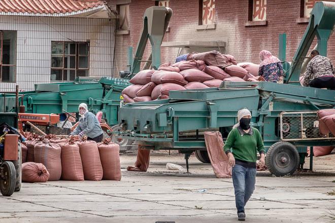 POTD: Bagging Seeds
