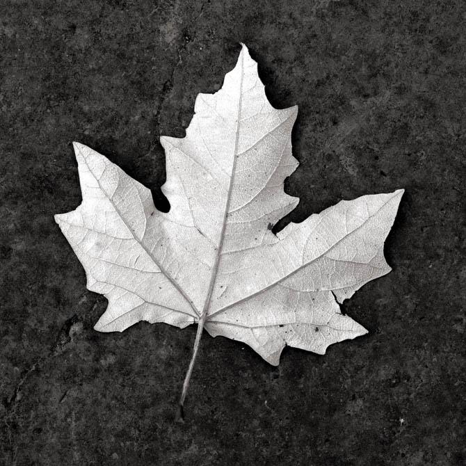 POTD: Anywhere Leaf