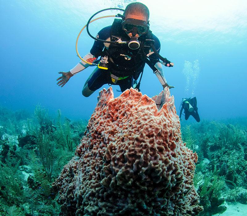 Belize Diving Tours-2