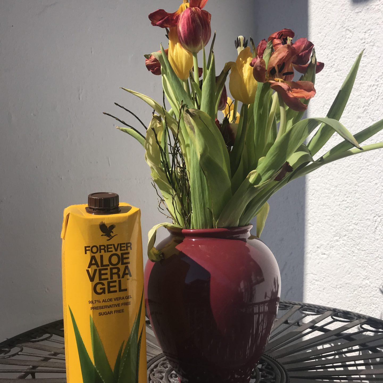 Aloe VERA Gel und frische Tulpen auf einem Tischchen im Freien