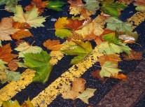 Leaf on water