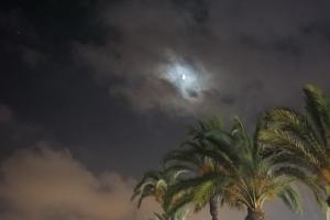 mi morena luna con palmeras