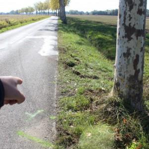 On devine les traces de freinage sur la chaussée, mais la conductrice n'a pas pu éviter le platane.