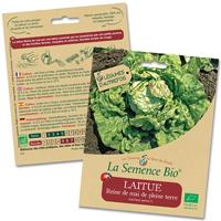 laitue bio - LA semence bio