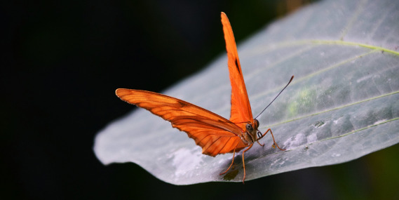 Butterfly Effect Moth Propaganda