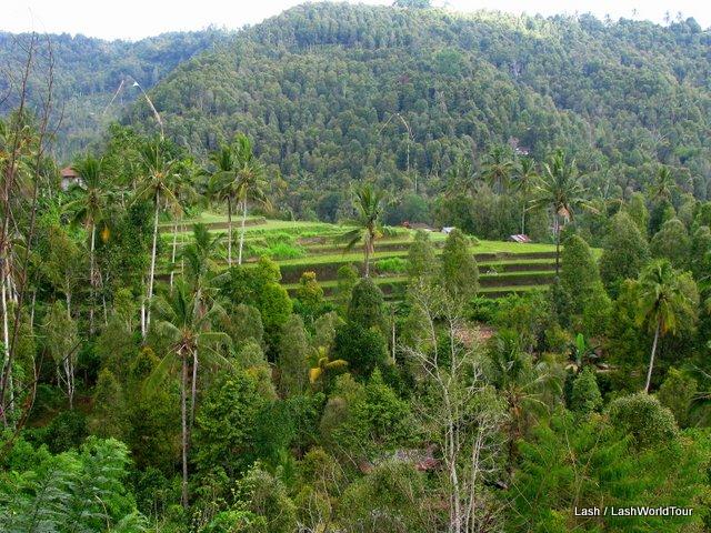 Munduk - north central Bali