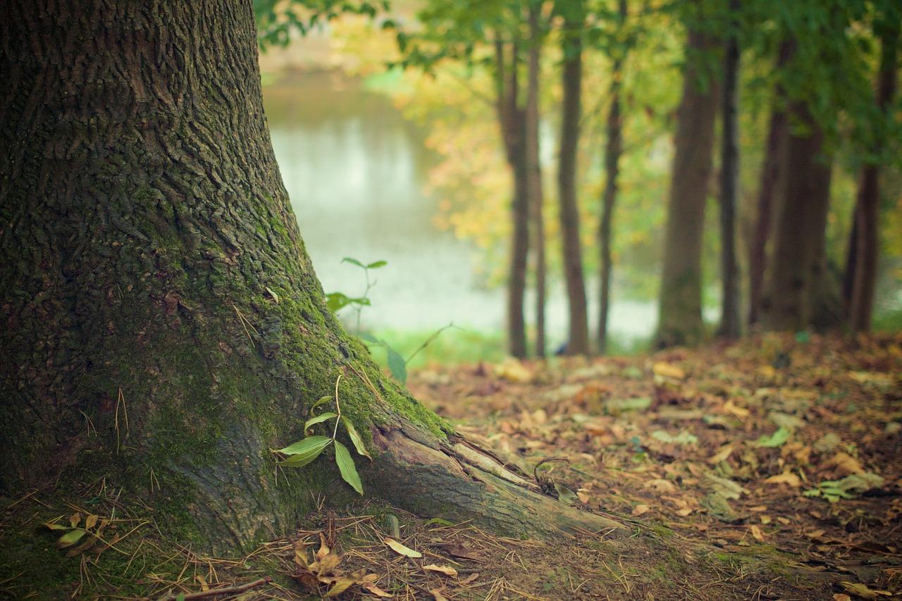 Un livre : La vie secrète des arbres
