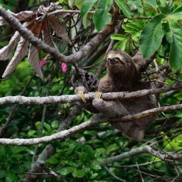 Chronique de livre : Be more Sloth de Alison Davies