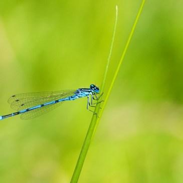 5 rituels pour se relier à la nature cet été