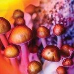 ¿Se avecina el uso medicinal de los psicodélicos?