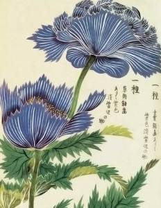 Par Kan'en Iwasaki/Iwasaki Tsunemasa (1786-1842) — http://pinterest.com/lucyalyce/my-little-hothouse/, Domaine public, https://commons.wikimedia.org/w/index.php?curid=21917294