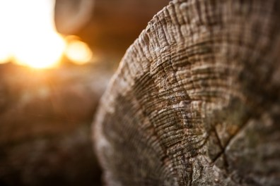 Cernes d'un arbre